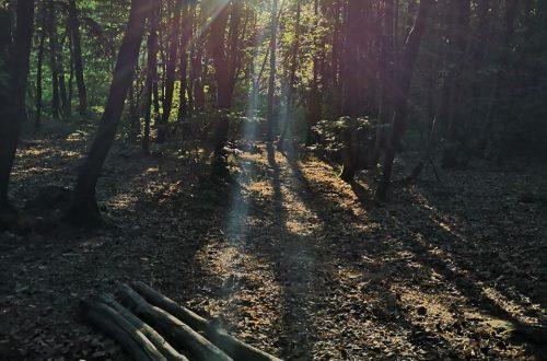 une nuit en forêt